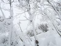 今年初の雪山。